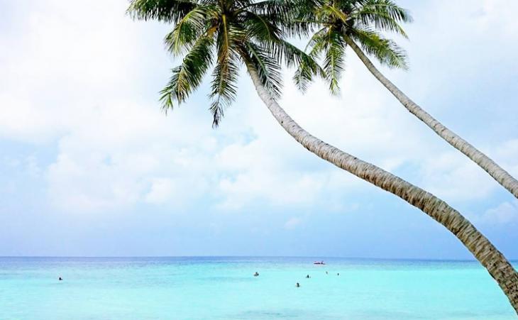 Malediivit palmut instagram