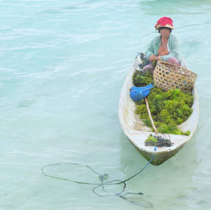 Merileväviljelmä Bali Nusa Lembongan instagram