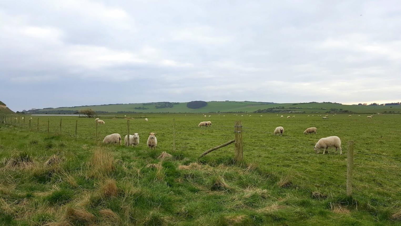 Englanti maaseutu rannikko lampaat