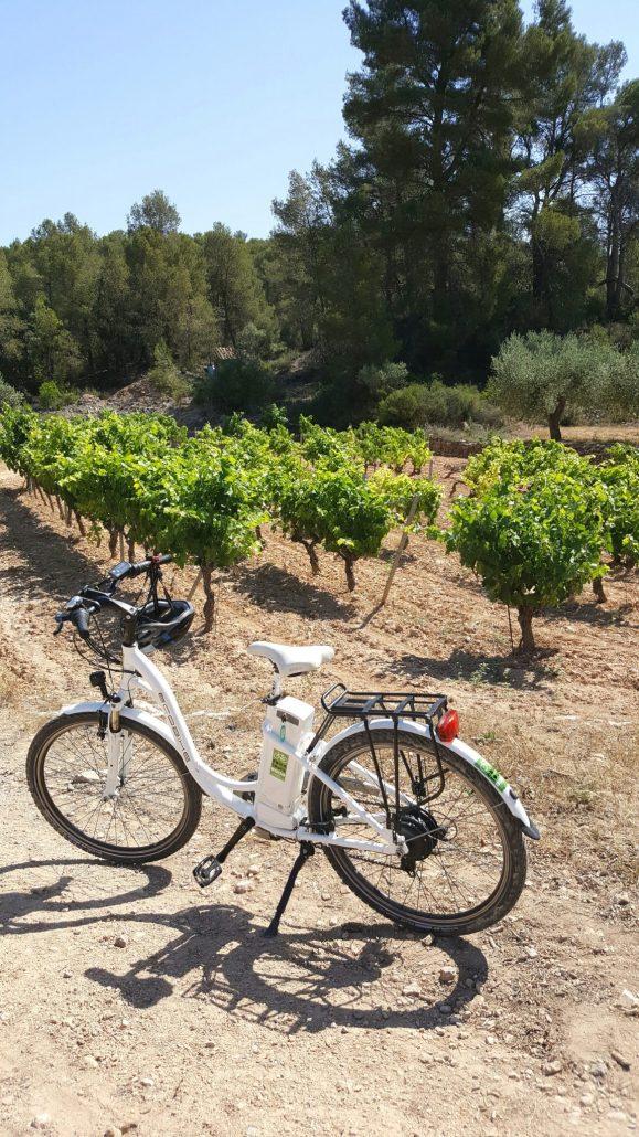 viinimatka pyöräily Barcelona Espanja