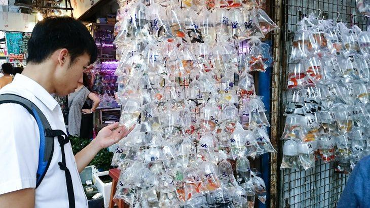 hongkong kultakalamarkkinat markkinat nähtävyydet