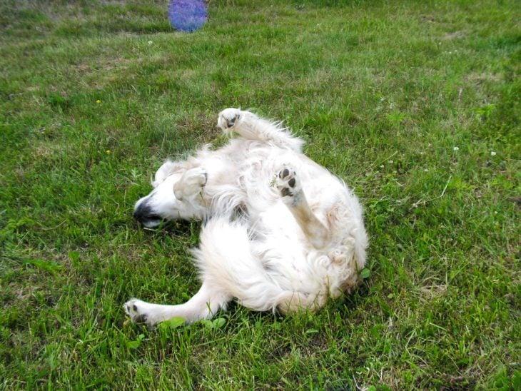 koiran vuosi kiinalainen horoskooppi