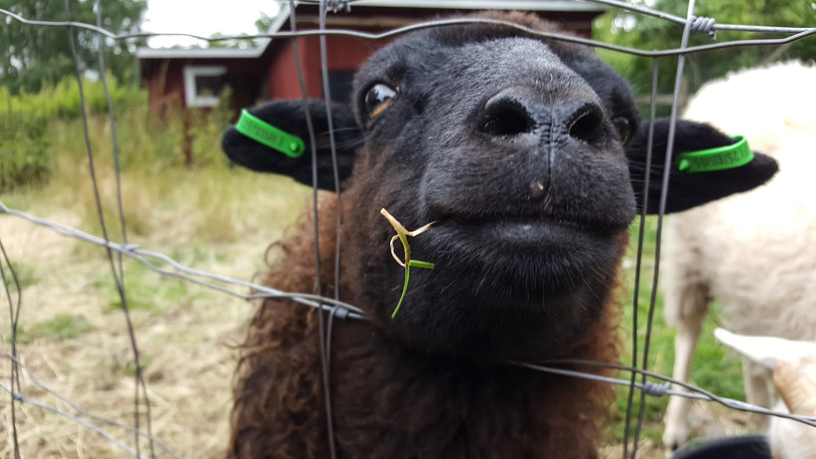 lammas postimäki
