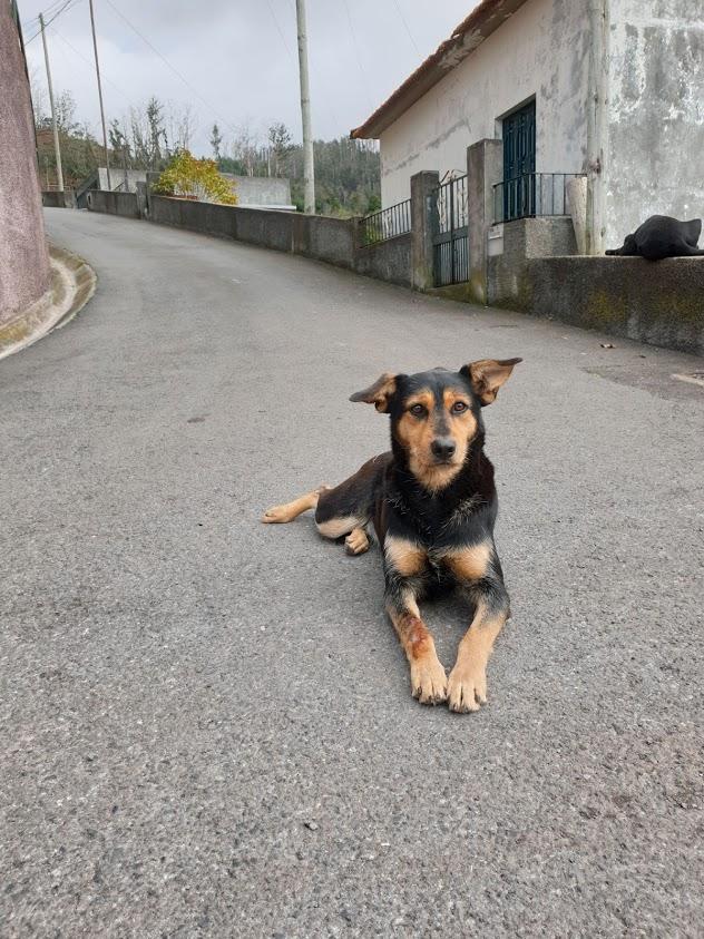 Madeira levadat patikointi kävely reitit