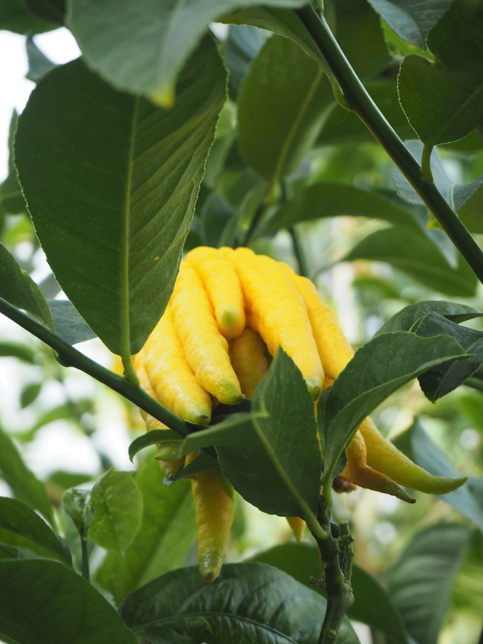 kasvitieteellinen puutarha tallinna käyntikohteita kokemuksia