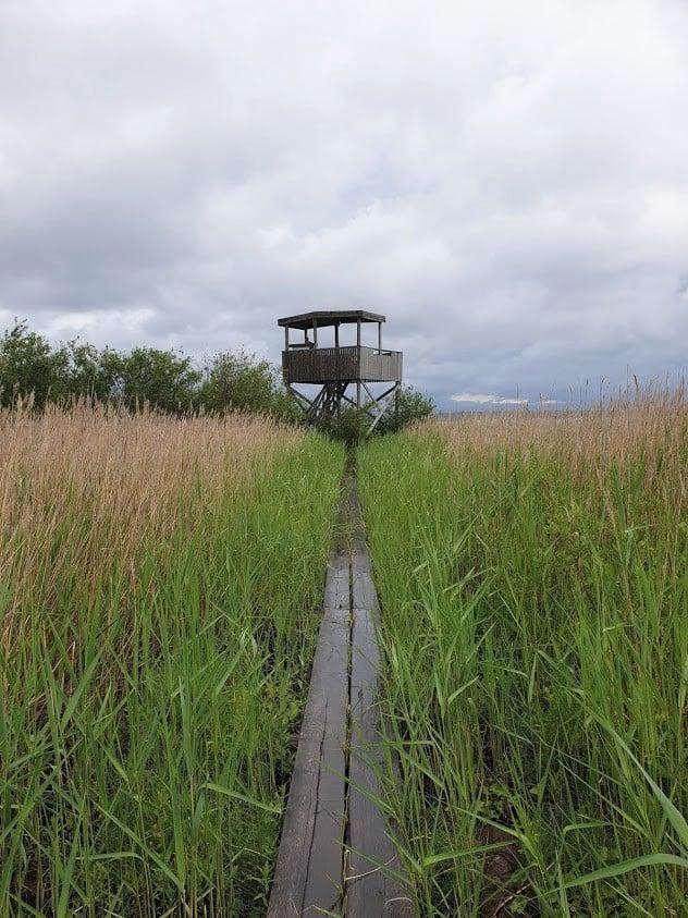 Kokkola ulkoilu luontopolku lintutorni Harrinniemi