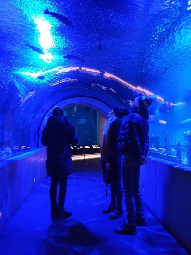 Tukholma nähtävyydet tekemistä päivä Tukholmassa viking line risteily akvaario skansen