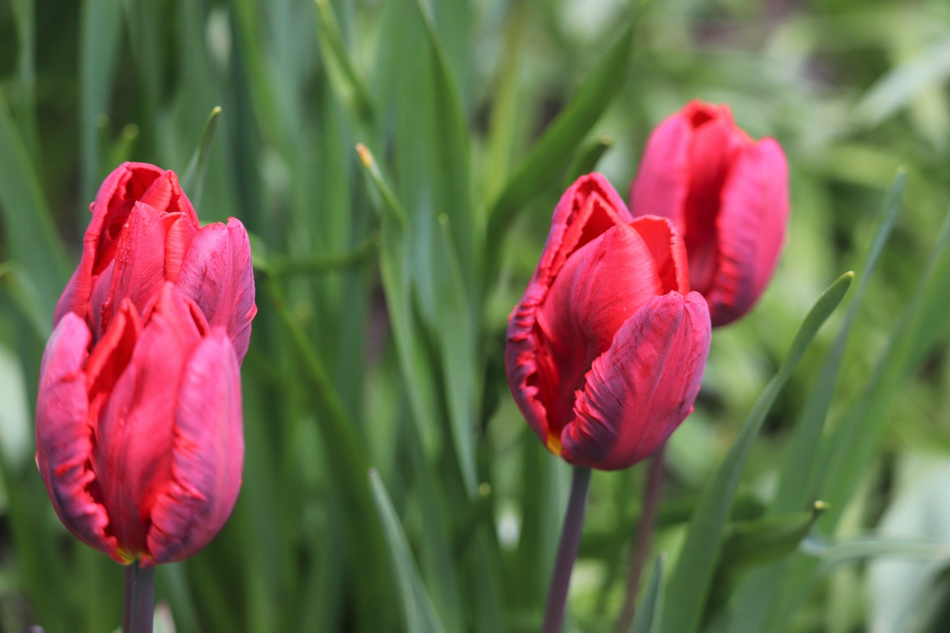 Hatanpää arboretum kevät puisto kukka kasvit