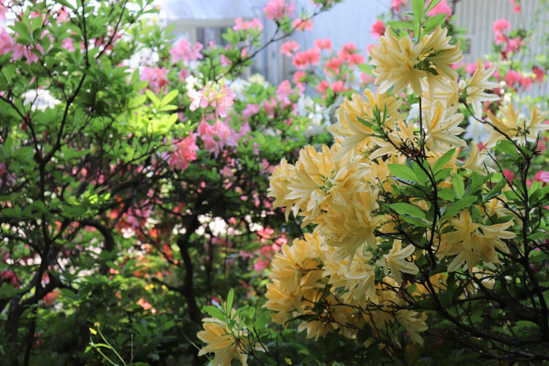 ruissalo turku nähtävyydet luonto päiväretki kesäloma kasvitieteellinen puutarha