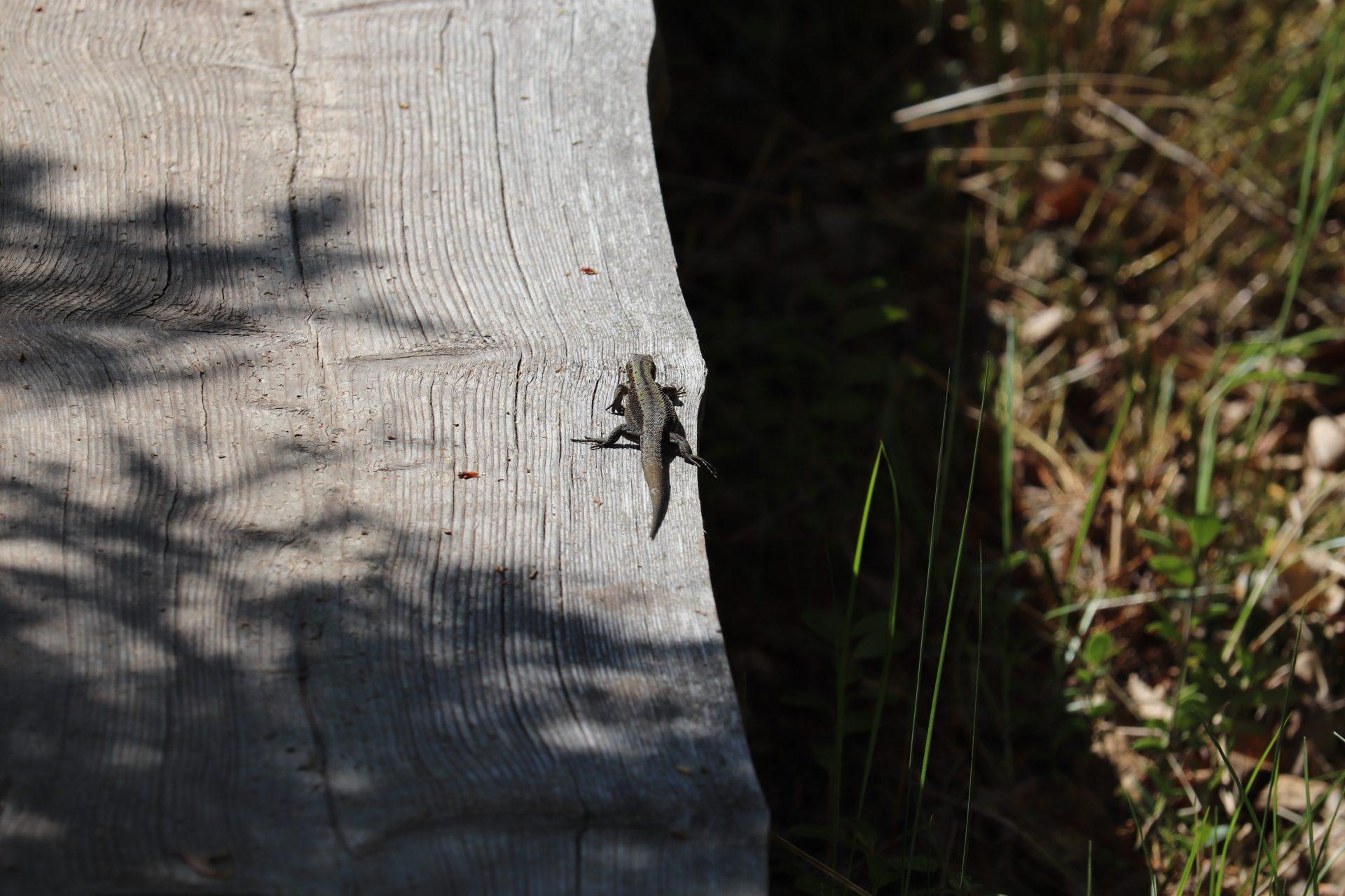 Siikaneva pirkanmaa ruovesi suo pitkospuut retki päiväretki patikointi retkikohde retkeily