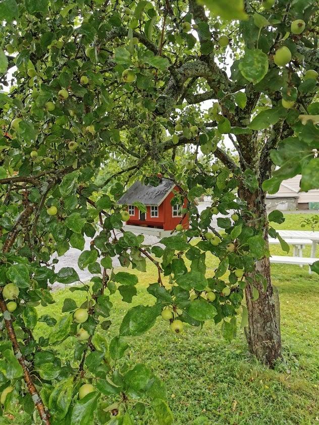 kenkävero omenapuu linnunpönttö