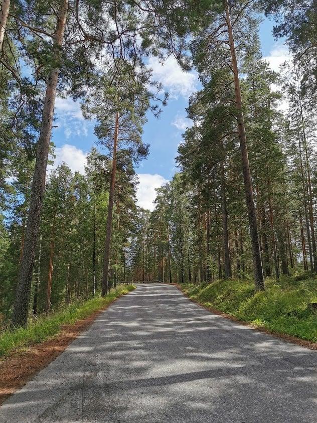 Punkaharju tie metsä harju