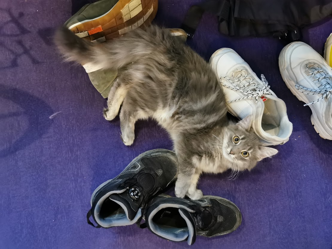 kissakahvila purnauskis tampere kissa kissanpentu kengät