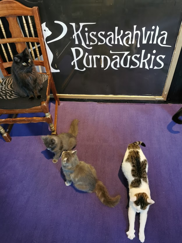 kissakahvila purnauskis tampere kissa