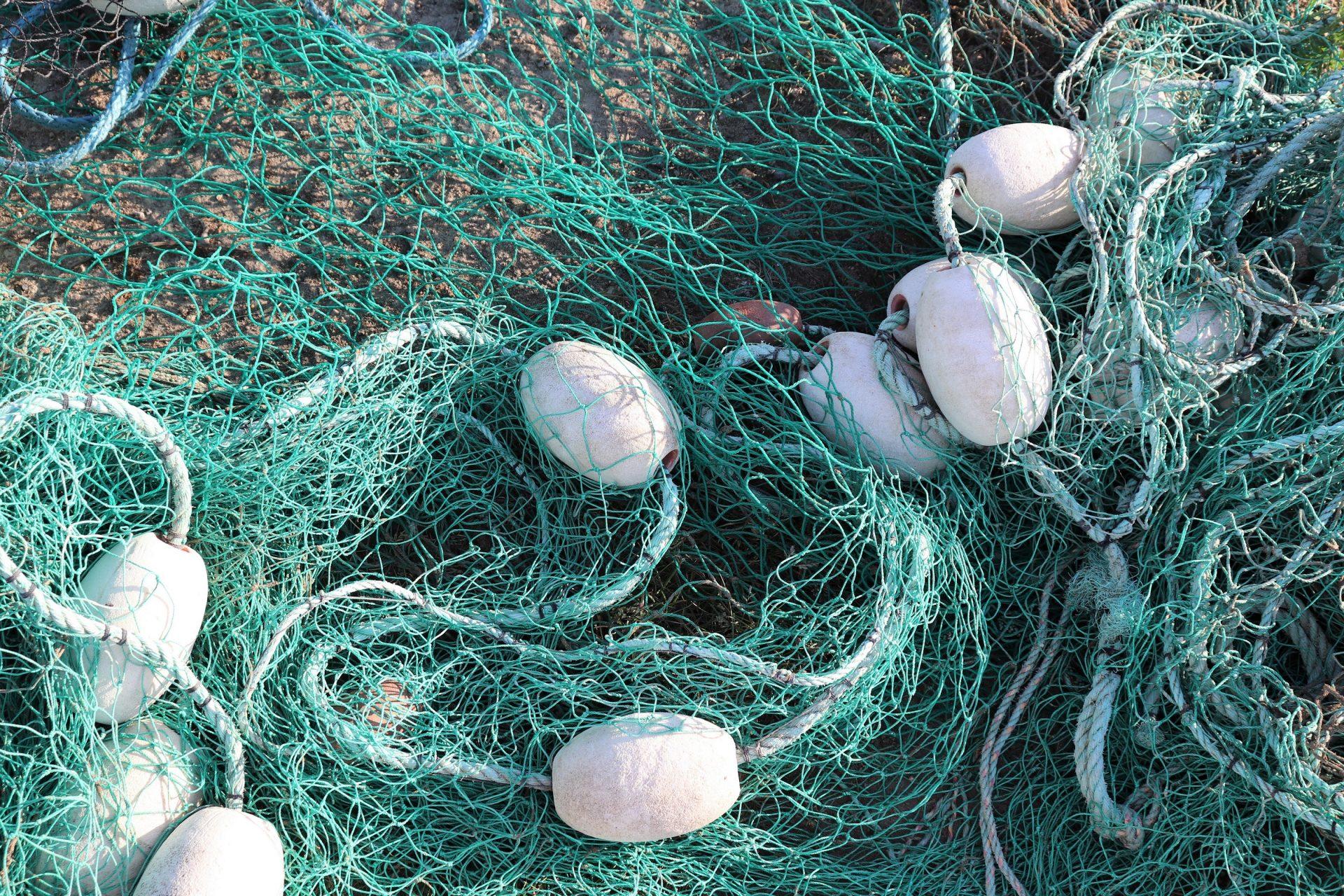 Hailuoto kalaverkko