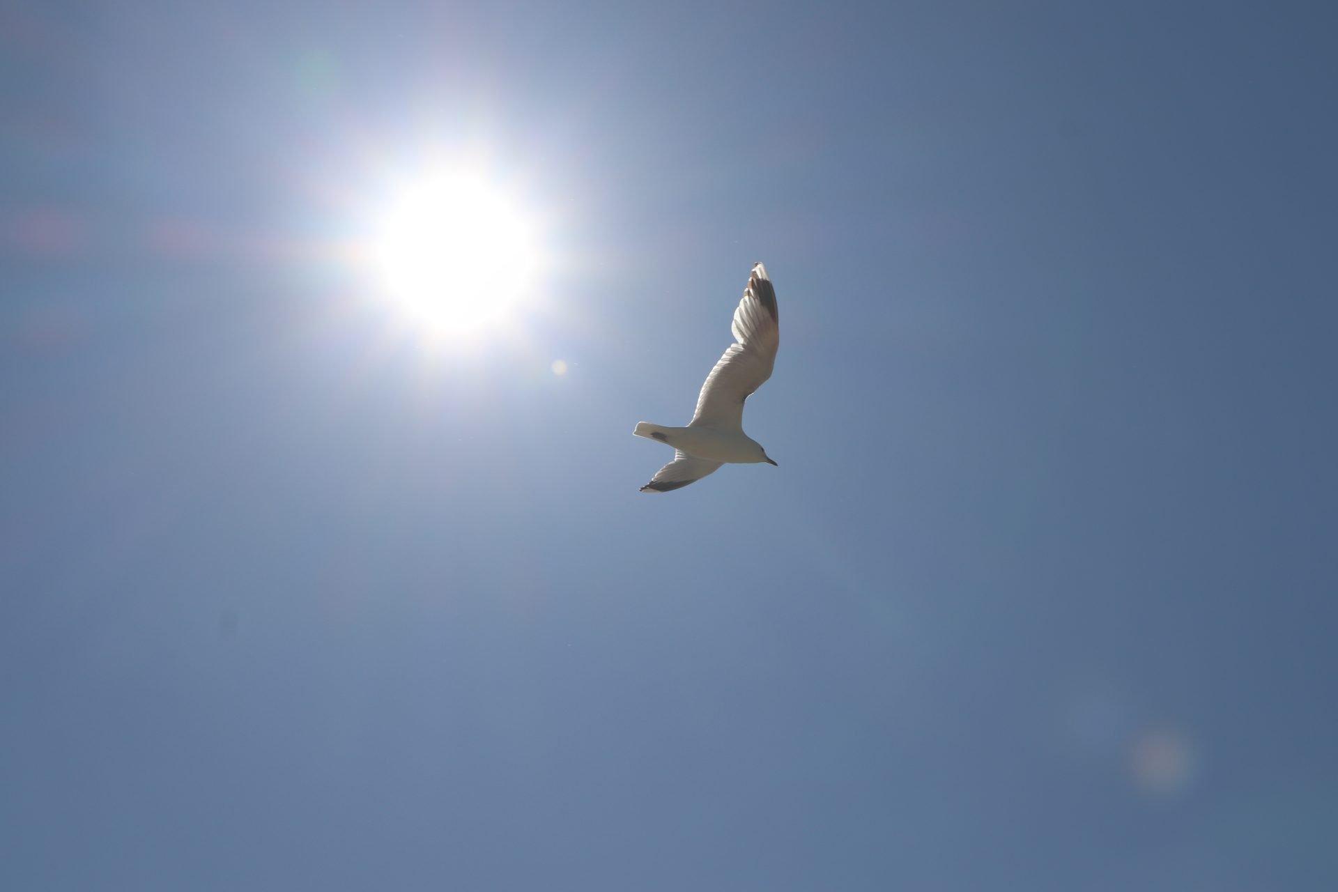 Hailuoto taivas aurinko lokki