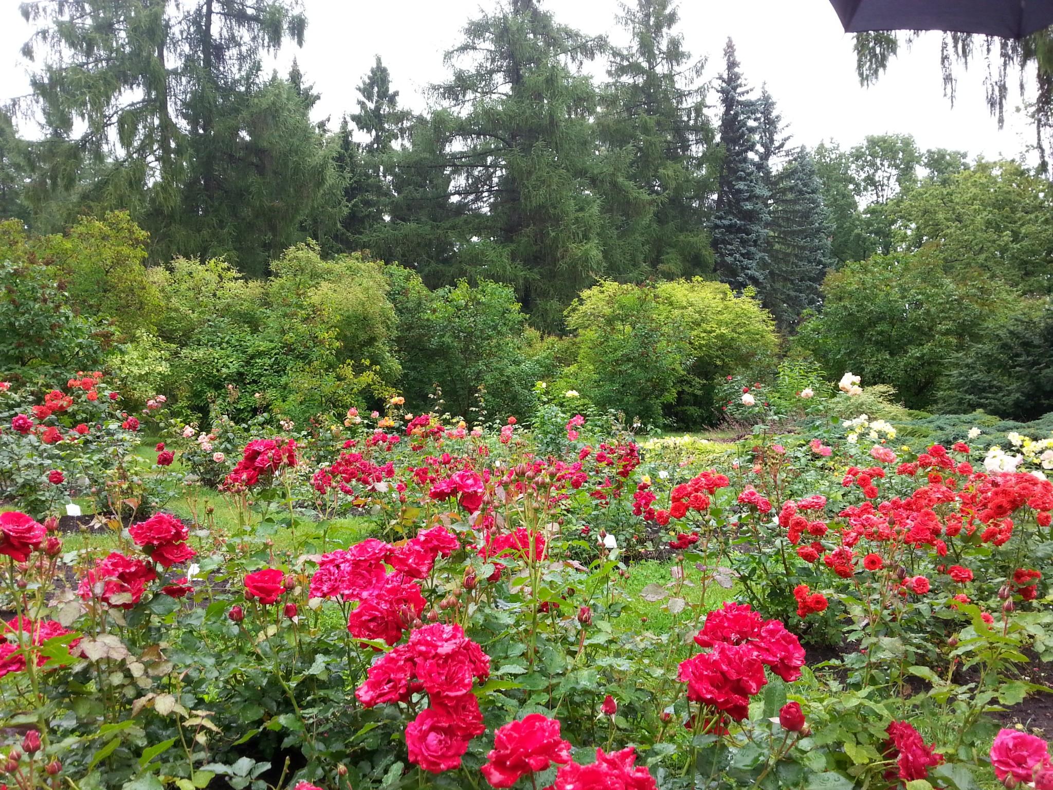 Onneksi näitä puutarhoja on kaikissa suurimmissa yliopistokaupungeissa. Vaikka en omaa puutarhaa koskaan saisikaan, on ihana tietää, että nämä paikat ovat avoimia kaikelle kansalle nautittavaksi!