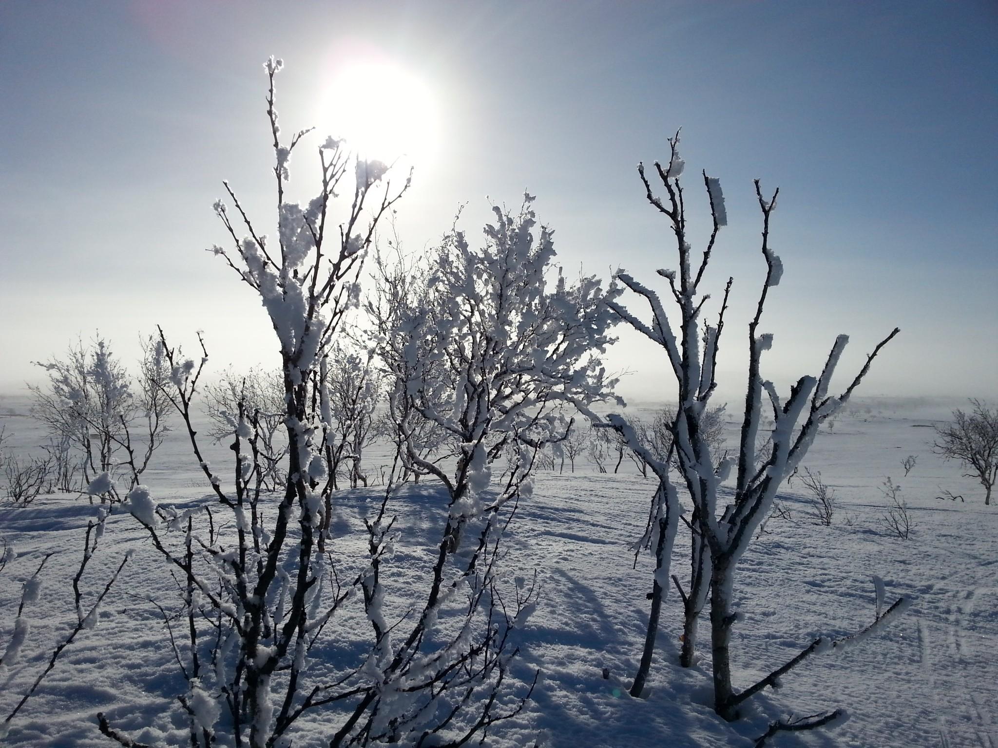Alma Arktika Kaldoaivi Nuorgam (140)