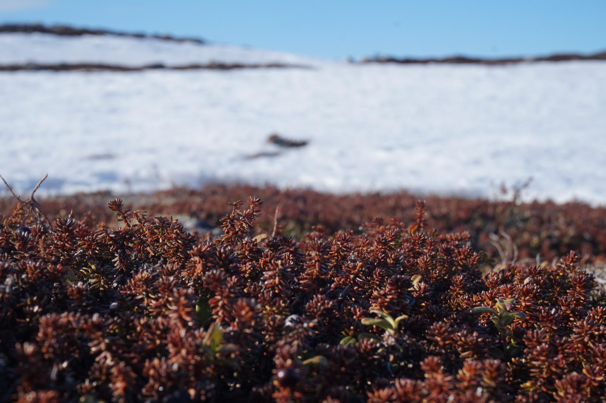 Alma Arktika Kaldoaivi Nuorgam (360)