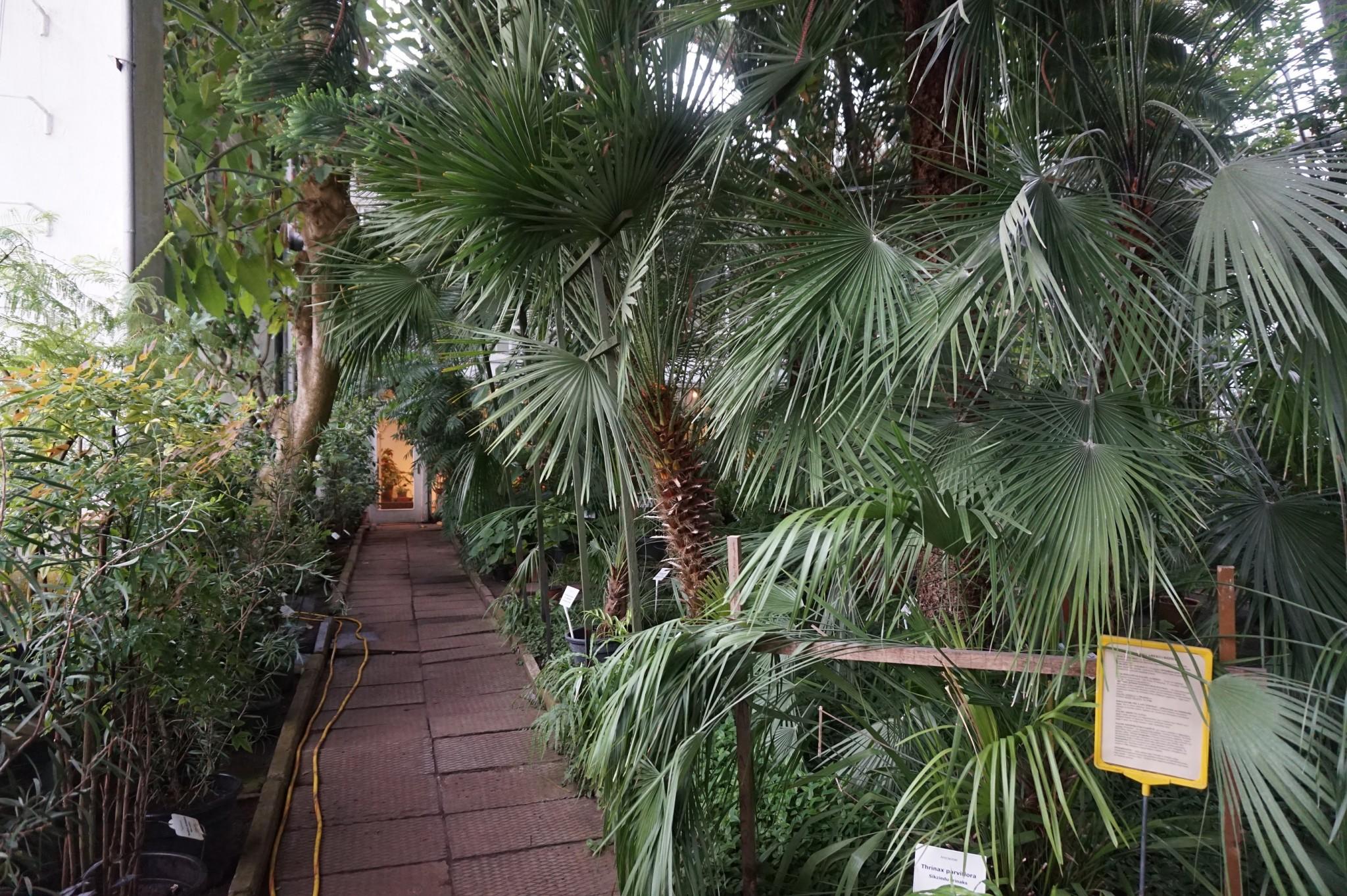 Sateisen päivän pelasti myös katettu puutarha. Sisätiloissa pystyi nauttimaan trooppisemmista kasveista ilman kastumisen vaaraa.