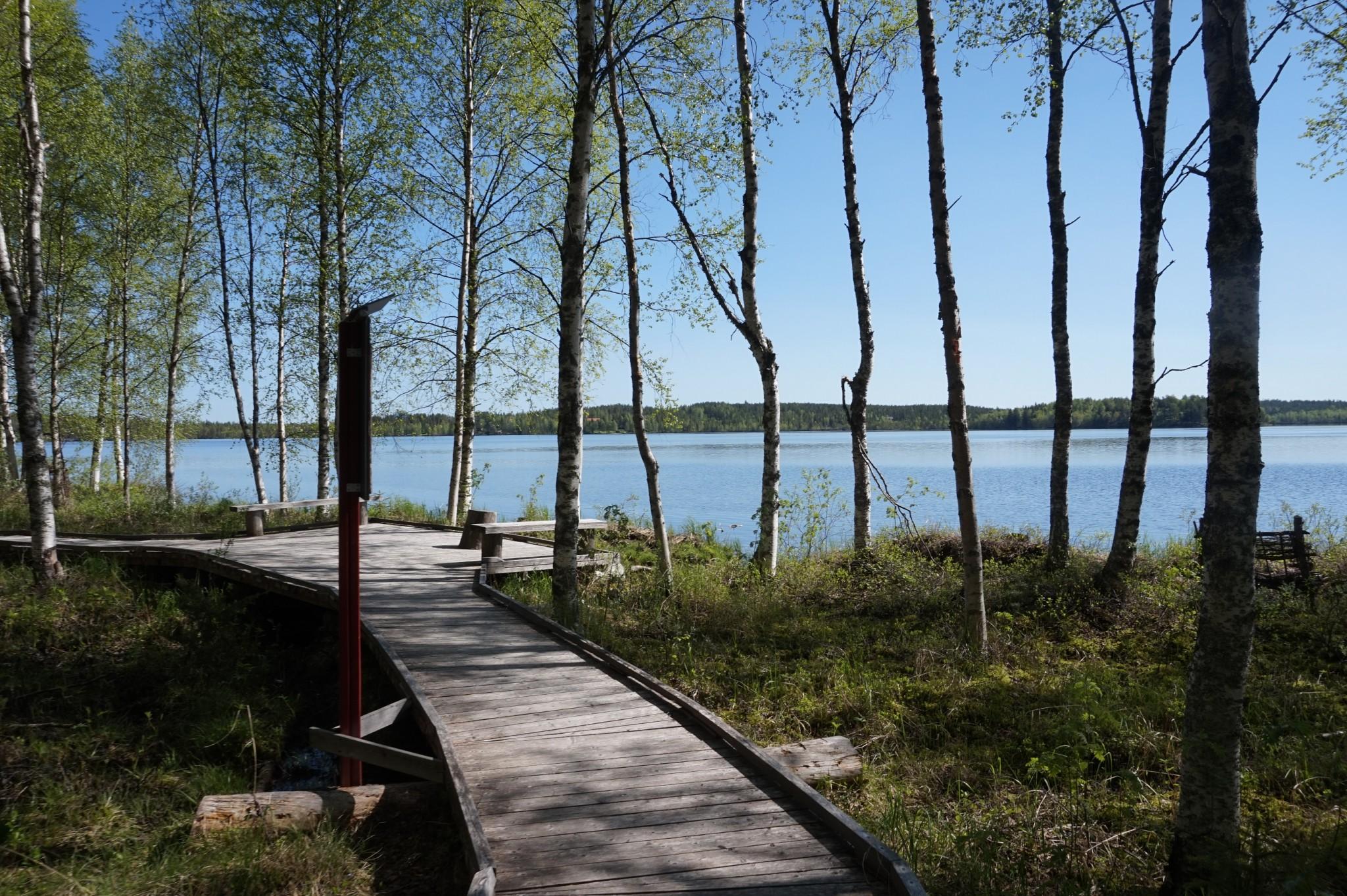 Näin hyvä polku kulkee Olkkajärven rannalta kohti Apukan Arboretumia.