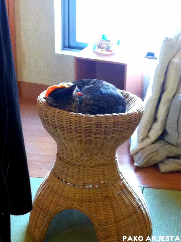 Ikebukuro Kissakahvila kissa korin päällä Tokio