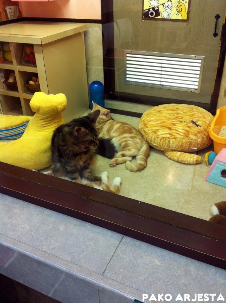 Kissatalossa kissoilla on omat huoneet