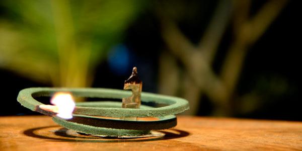 Hyönteiskarkote Ubudissa