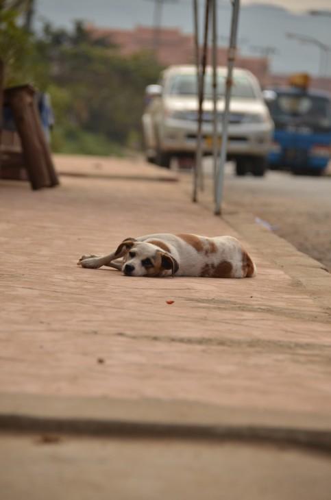 Koira tiellä