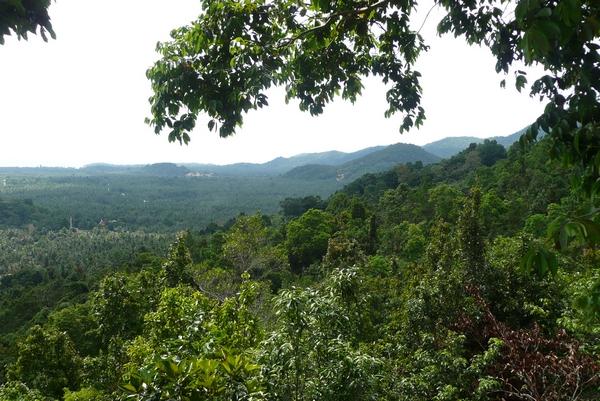 5-viidakkoa
