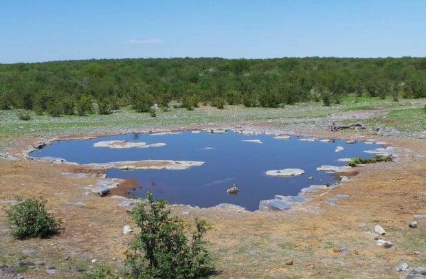 Halalin leirin läheisyydessä olevalla juomapaikalla ei keskipäivän kuumuudessa ollut eläimiä.