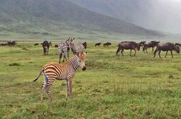 Luonto ja eläimet olivat Afrikan parasta antia.