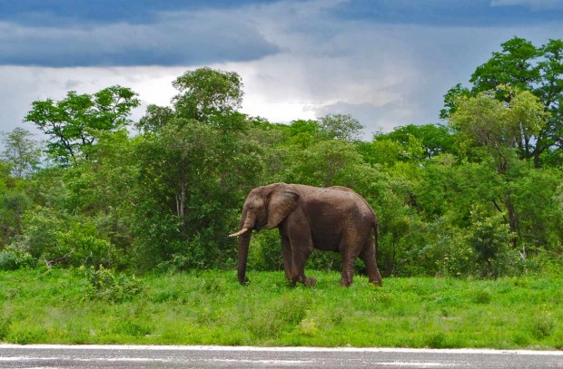 Botswanassa elefantit marssivat aivan tien vieressä.