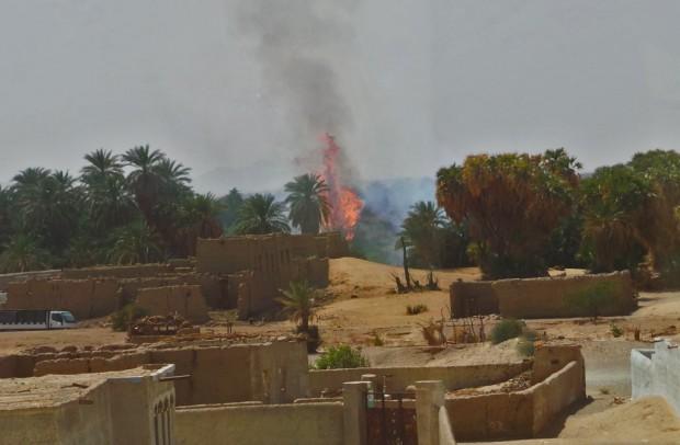 Sudanin aavikolla oli niin kuivaa, että palmutkin syttyvät tuleen.
