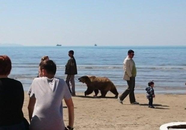Mies ja karhu rannalla.