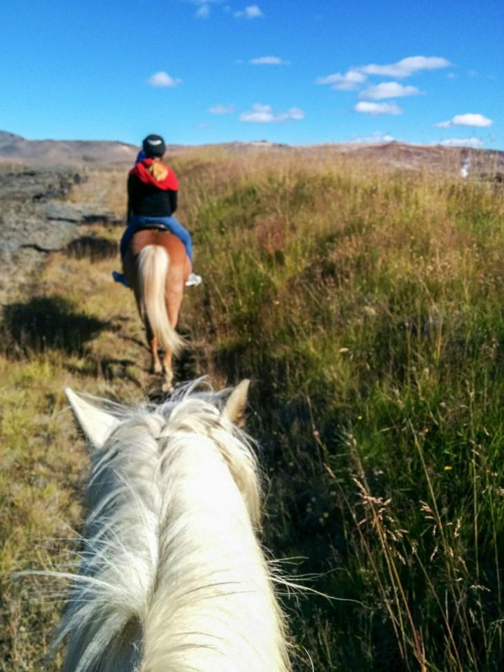 islanti hevoset myvatn