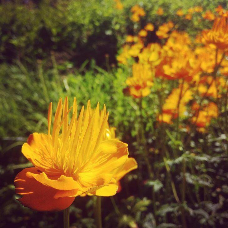 Hatanpn arboretum on juuri parhaimmillaan! On ruusuja ja vaikka mithellip