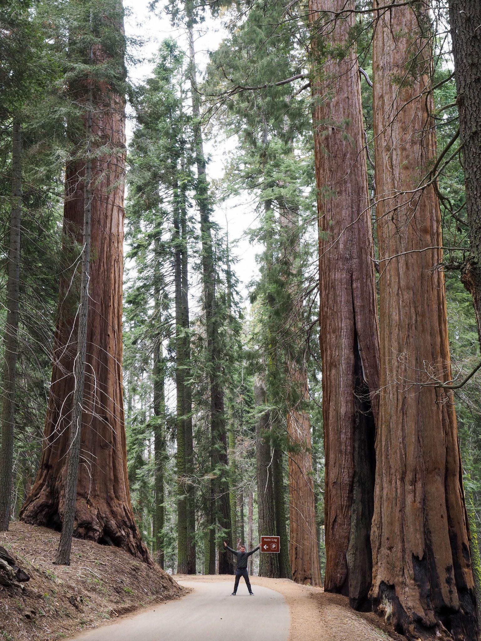 sequoia kansallispuisto