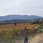 Beautiful Colchagua Valley wineyard santacruz chile colchagua via nature countrysidehellip