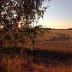 Syksy saapuu! autumn nature lakeus pohjanmaa finland evening