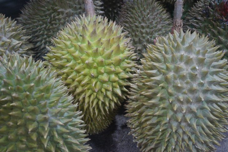 Durian Hedelmä