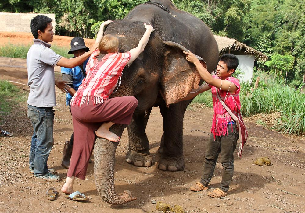 Kuinka monta thaimiestä tarvitaan saamaan yksi täti-ihminen norsun selkään?