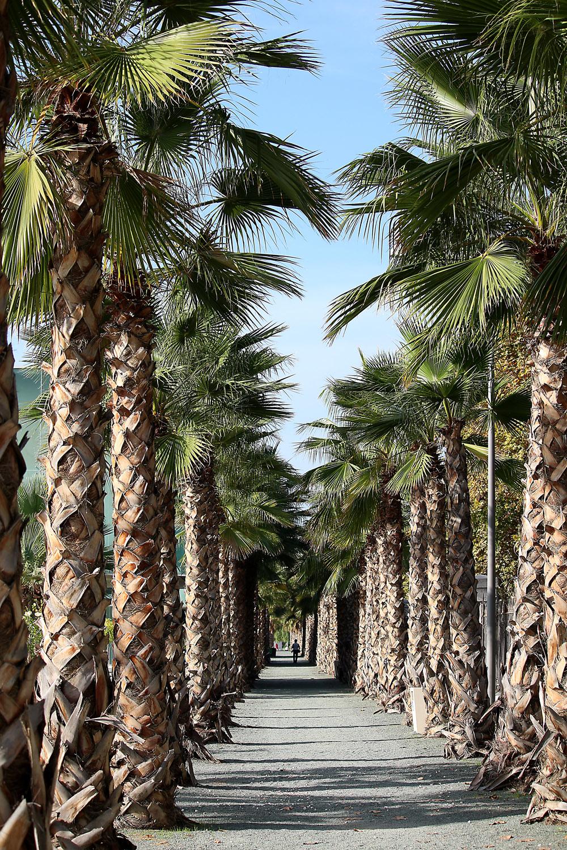 malaga ja palmuja