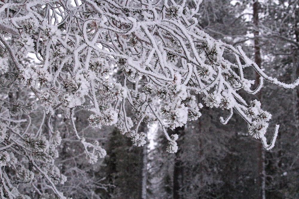 Talvimetsä3