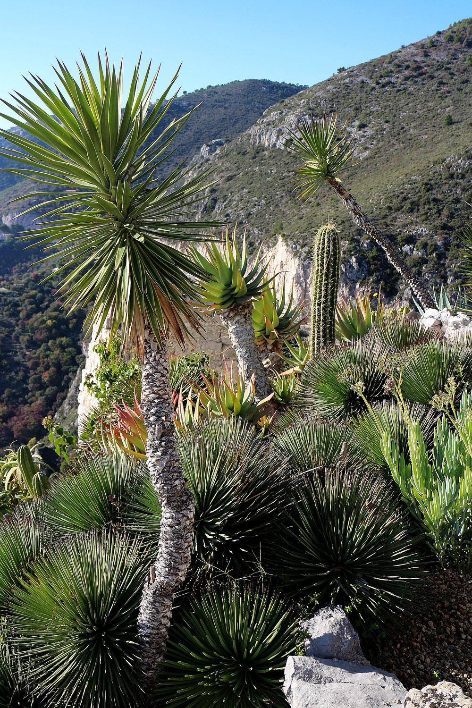 kaktukset