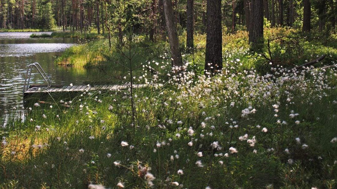 isojärvi kansallispuisto