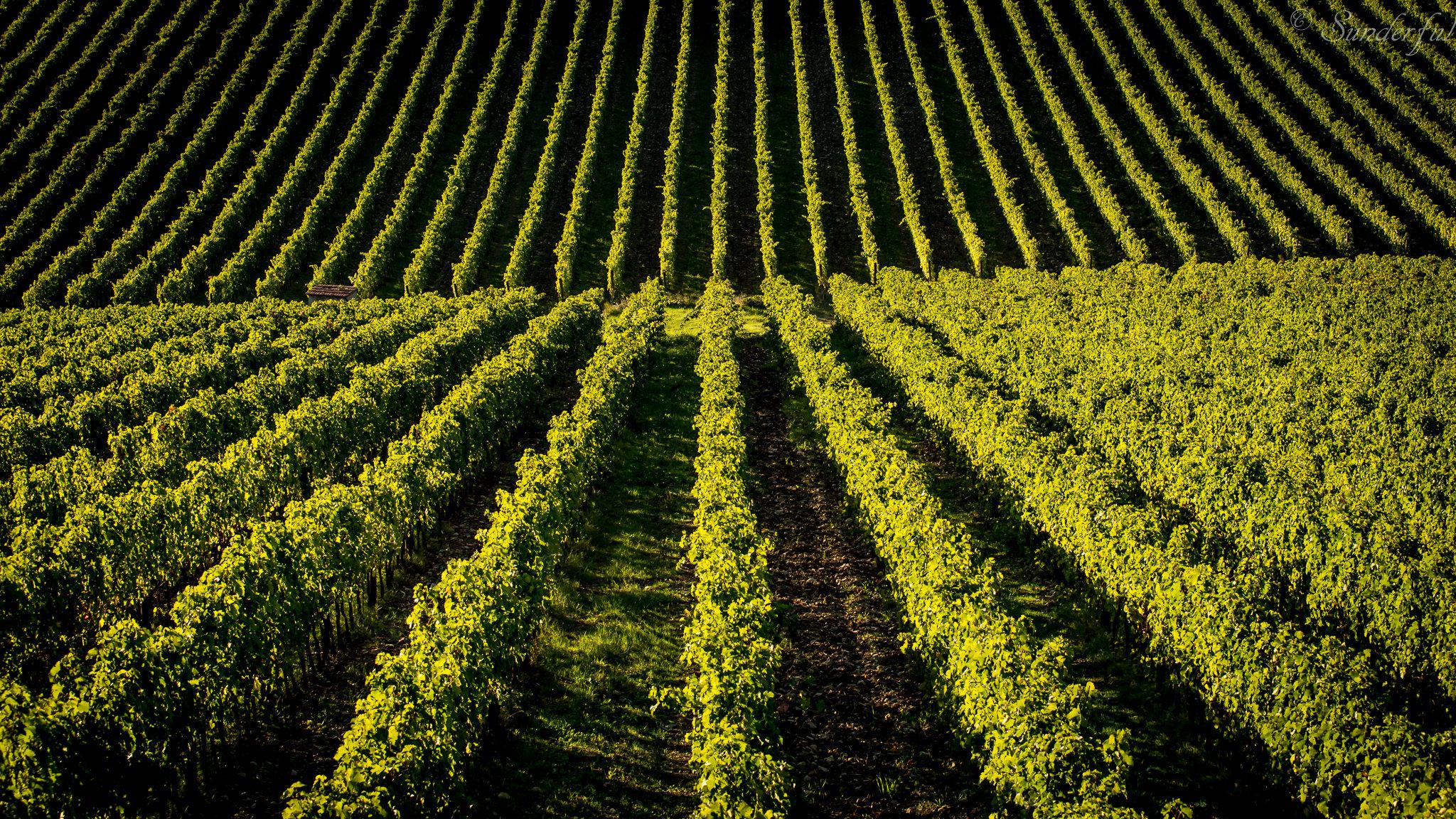 Viinitila Italiassa
