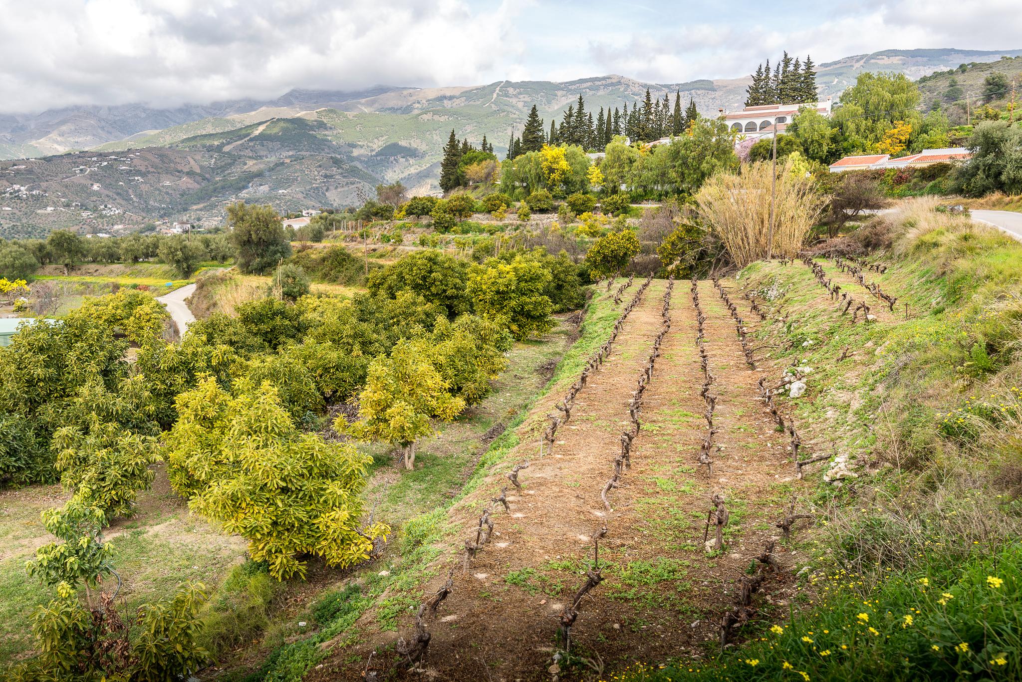 Andalusian_vuoristoista_maaseutua