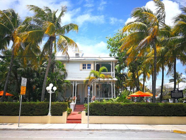 Puutalo ja palmupuita