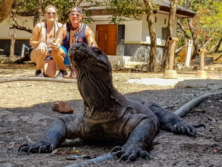 komodo dragon and two people behind it